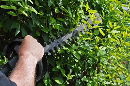 Tous nos services d'entretien d'espaces verts: élagage, tonte de pelouse, taille de haie, ramassage des feuilles